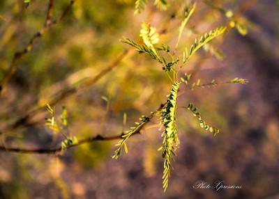 leaves-sm_6261