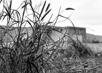house weeds bw-sm_6656
