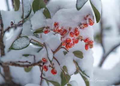 berries-sm_6085