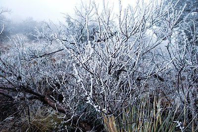 ice bush-sm_6040
