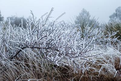 ice bush-sm_6032