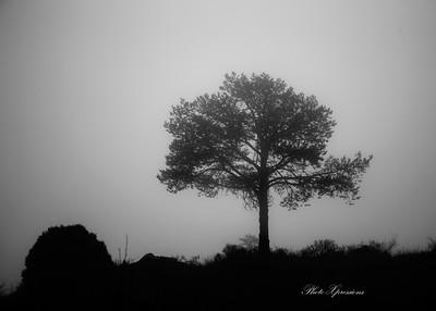 tree fog bw-sm_5935