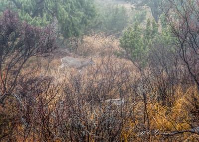 deer crossing-sm_5924