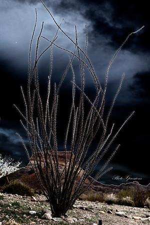 abstract bush-sm_6665