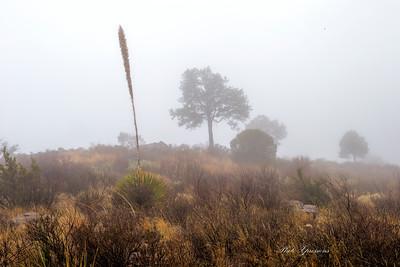 tree hill cactus fog-sm_5940
