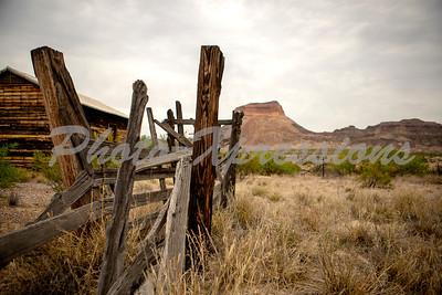 fence mountain sage_9544