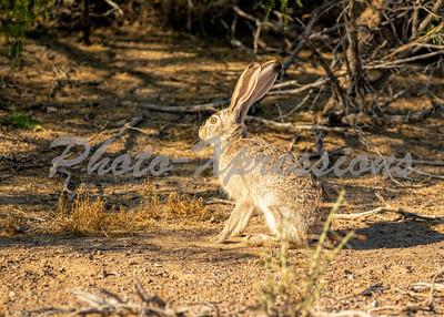 rabbit_7946