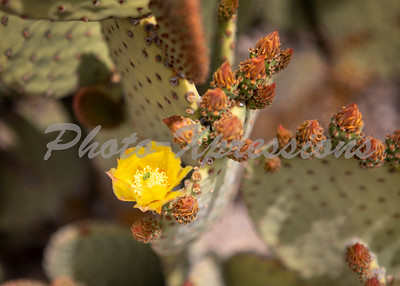 catus blooming_9513