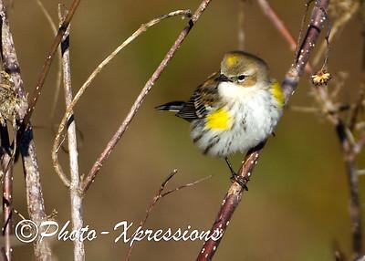 bird_1955