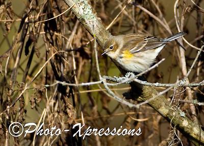 bird_1949