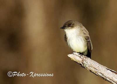 bird_1943