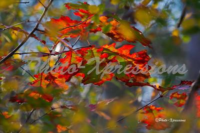 leafs_2324