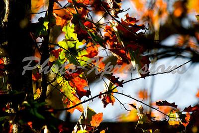 leafs_2320
