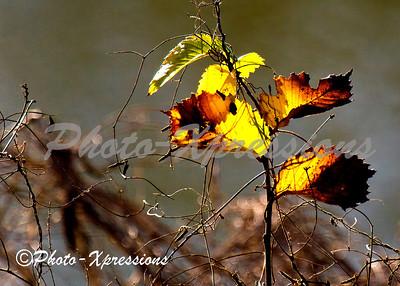 leafs_2302