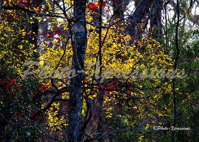 leafs_2311