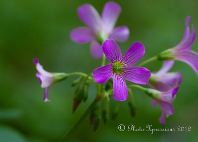 flower_2339