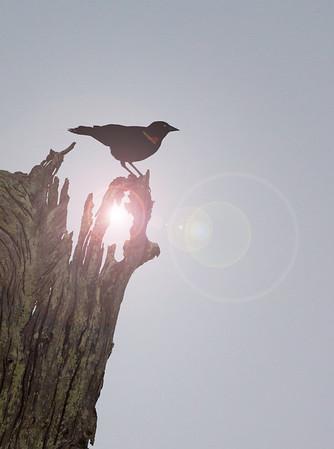 lens flair bird on tree_0069