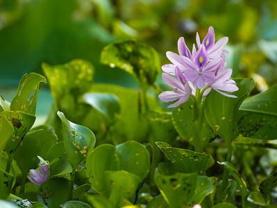 Flower in bloom_0558