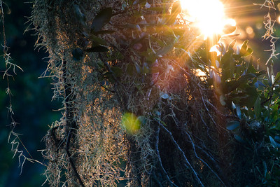 sun ray burst_0256