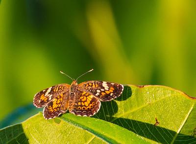 butterfly-0316