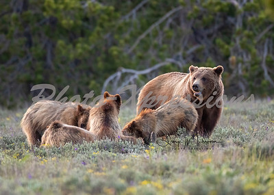 399 4 cubs watching over_0403