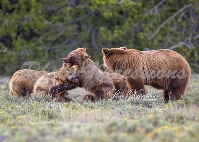 399 cubs fighting-wm_1057