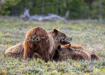 399 cubs eating-wm_0360