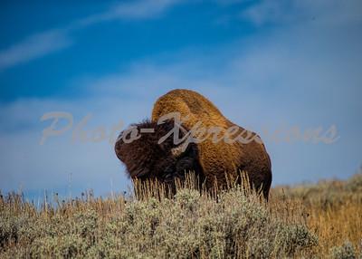 Buffalo hill blue sky_5642