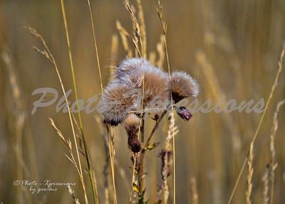 weed flower_4725