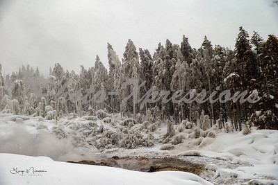 snow trees-wm_0128