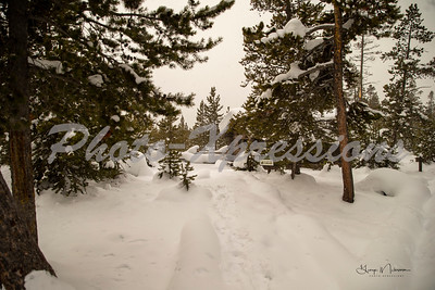 walking path-wm_0097