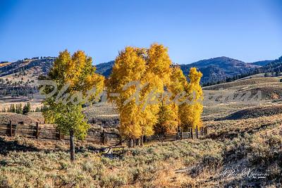 fall tree colors_0512