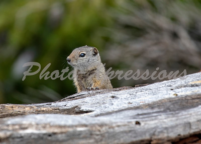 rodent_8651