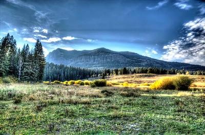 Jerry Latta-Yellowstone Meadow