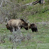 Grizzly Mom and Cub having a special moment