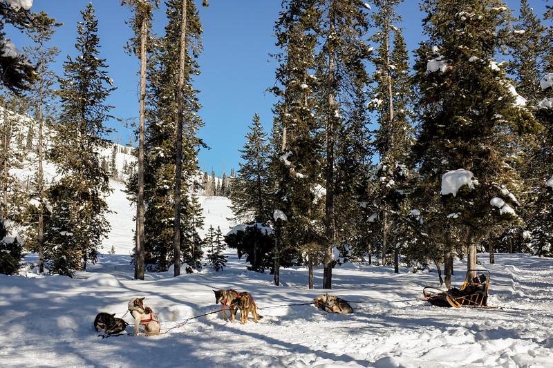 Friday 1 January - Dog sledding!
