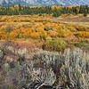 Sagebrush root, Grand Teton Overlook