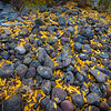 River rocks in Autumn, Lamar Valley