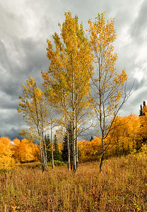Yellowstone NP and cottonwood colors
