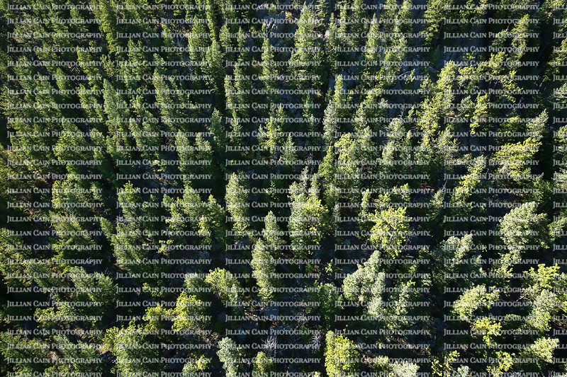 Aerial view of pine trees in Estes Park in the Rocky Mountains, Colorado, USA.