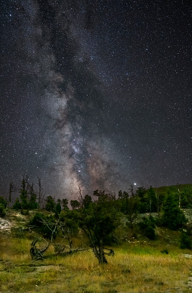 Milky Way Over Spooky Trees In the Mammoth Highlands