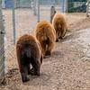 Bear butts!