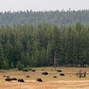Hello, bison!