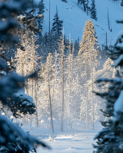 Yellowstone is quite beautiful in the winter