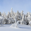 Steam from all the hot springs blows across adjacent trees to produce a true winter wonderland