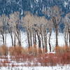 The winter colours in Yellowstone are dramatic