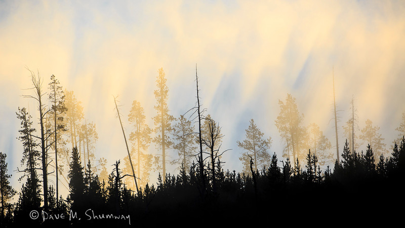 Light spills over Roaring Mountain through the trees and steam in Yellowstone National Park. Captured with a Canon 5D III and 500/4.0L IS in aperture priority mode with an exposure bias of 0 at ISO200, f/7.1, and 1/1250th of a second. The camera was resting on a beanbag.