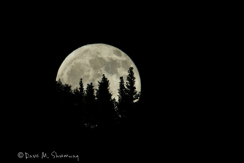 The full moon rises through trees on a ridgeline in Yellowstone National Park. Captured with a Canon7D and 500/4.0L IS + 1.4TC III in aperture priority mode with an exposure bias of - 4/3 at ISO200, f/11, and 1/160th of a second. The camera was resting on a beanbag.