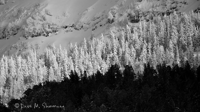 Light, Snow and Trees align on a mountainside above Round Prairie in Yellowstone National Park. Captured with a Canon 7D and 500/4.0L IS in aperture priority mode with an exposure bias of - 4/3 at ISO400, f/4.0, and 1/8000th of a second. The camera was resting on a beanbag.