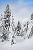After a Heavy Snowfall - Yellowstone